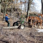 Mike Healy with horses pulling logs at Donald Rock