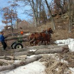 Horses pulling logs at Donald Rock